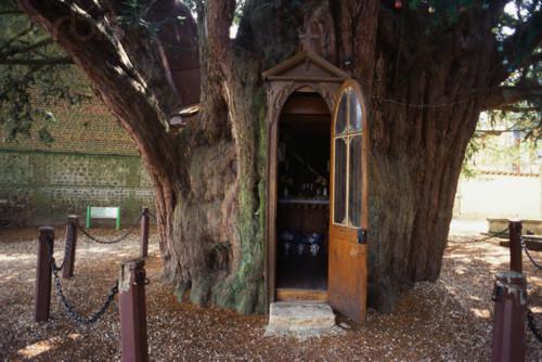 Saint Anne Chapel in Yew Tree in Normandy