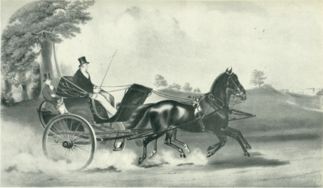 tiger-in-carriage